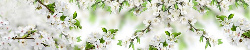 Изображение для стеклянного кухонного фартука, скинали: цветы, яблоня, ветки, skin215