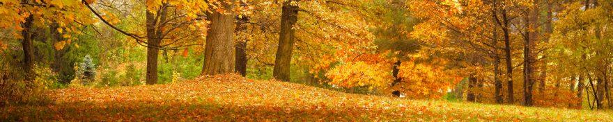 Изображение для стеклянного кухонного фартука, скинали: природа, лес, осень, skin217