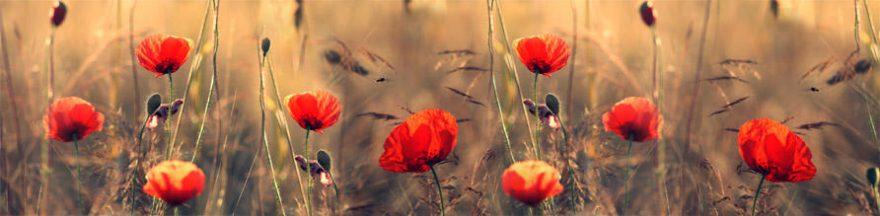 Изображение для стеклянного кухонного фартука, скинали: цветы, маки, skin240