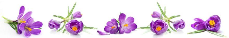 Изображение для стеклянного кухонного фартука, скинали: цветы, крокусы, skin243