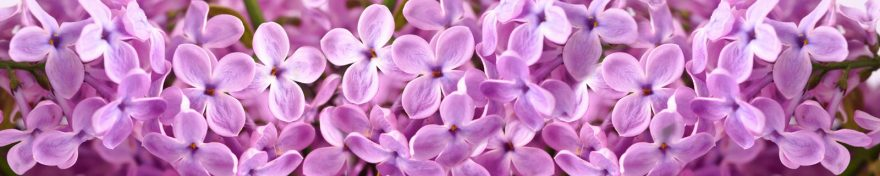 Изображение для стеклянного кухонного фартука, скинали: цветы, сирень, skin331