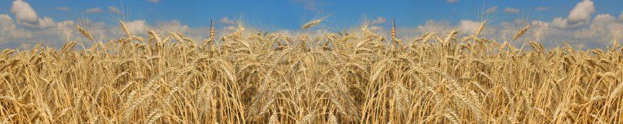 Изображение для стеклянного кухонного фартука, скинали: пшеница, skin362