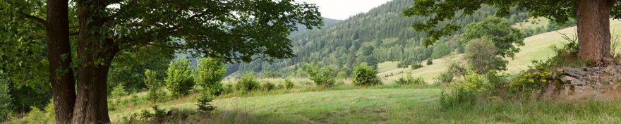 Изображение для стеклянного кухонного фартука, скинали: холм, деревья, лес, skin393