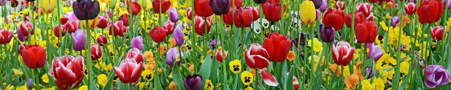 Изображение для стеклянного кухонного фартука, скинали: цветы, тюльпаны, анютины глазки, skin415