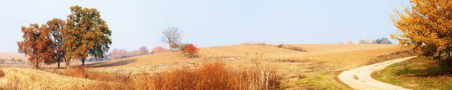 Изображение для стеклянного кухонного фартука, скинали: природа, деревья, осень, skin426
