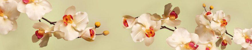 Изображение для стеклянного кухонного фартука, скинали: цветы, орхидеи, skin434