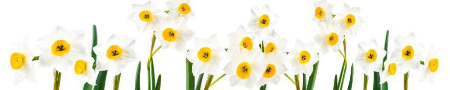 Изображение для стеклянного кухонного фартука, скинали: цветы, нарциссы, skin447