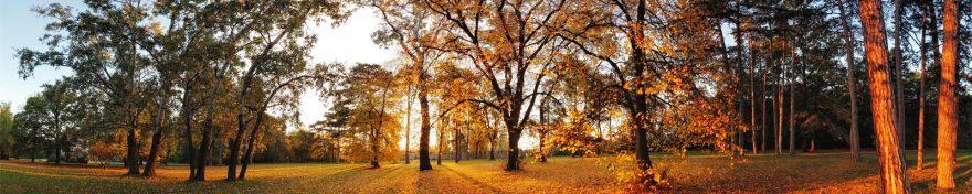 Изображение для стеклянного кухонного фартука, скинали: деревья, лес, осень, skin449
