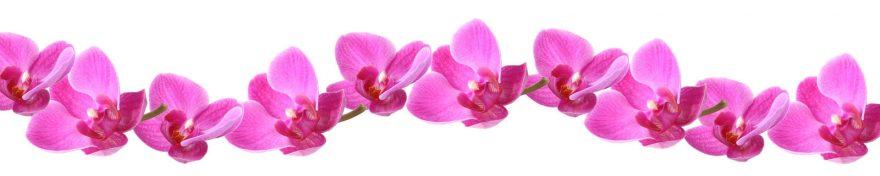 Изображение для стеклянного кухонного фартука, скинали: цветы, орхидеи, skin453