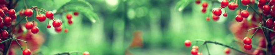 Изображение для стеклянного кухонного фартука, скинали: ягоды, ветки, skin521