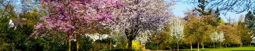 Изображение для стеклянного кухонного фартука, скинали: цветы, деревья, яблоня, skin524