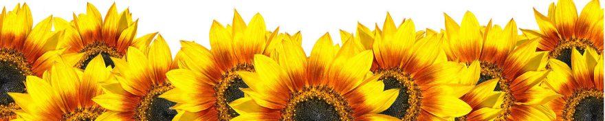 Изображение для стеклянного кухонного фартука, скинали: цветы, подсолнухи, skin78