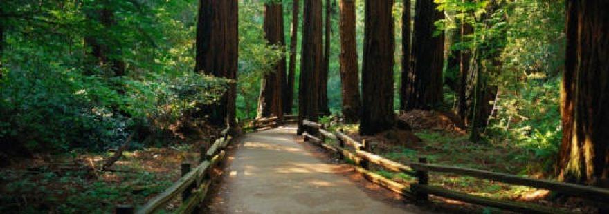 Изображение для стеклянного кухонного фартука, скинали: деревья, лес, дорога, skinap10