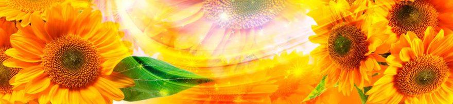 Изображение для стеклянного кухонного фартука, скинали: цветы, подсолнухи, skinap125