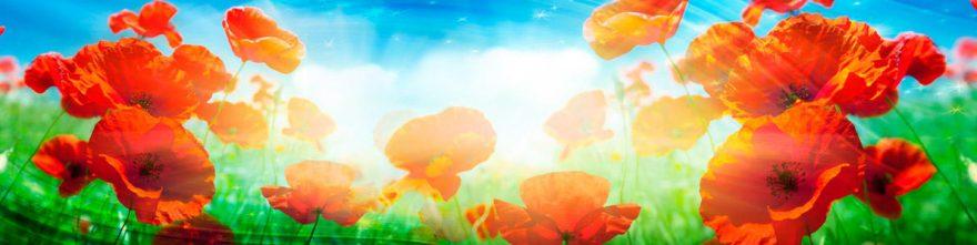 Изображение для стеклянного кухонного фартука, скинали: цветы, маки, skinap126