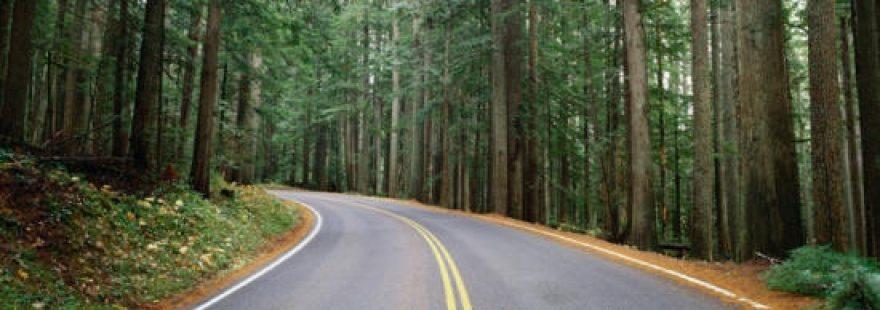 Изображение для стеклянного кухонного фартука, скинали: лес, дорога, skinap12
