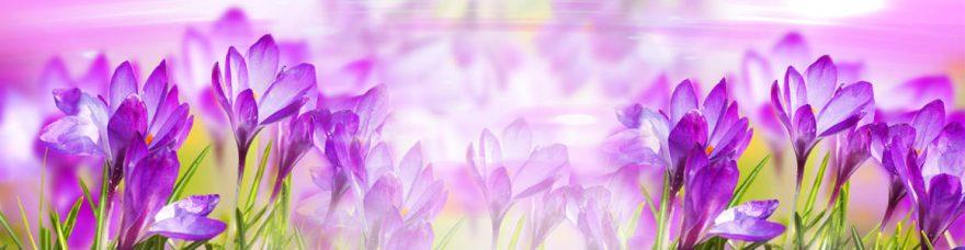 Изображение для стеклянного кухонного фартука, скинали: цветы, крокусы, skinap131