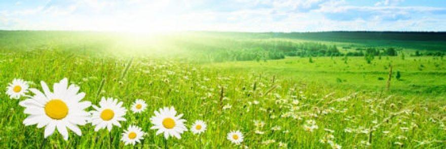 Изображение для стеклянного кухонного фартука, скинали: цветы, поле, природа, трава, ромашки, skinap40