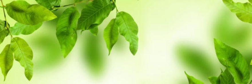 Изображение для стеклянного кухонного фартука, скинали: листья, ветки, skinap43