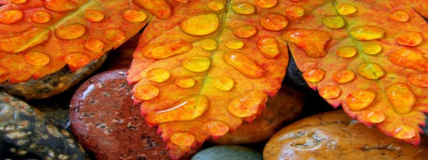 Изображение для стеклянного кухонного фартука, скинали: камни, листья, капли, skinap55
