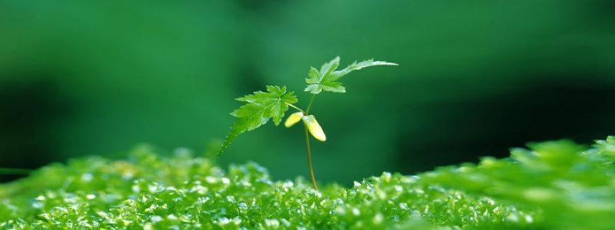 Изображение для стеклянного кухонного фартука, скинали: растение, skinap56