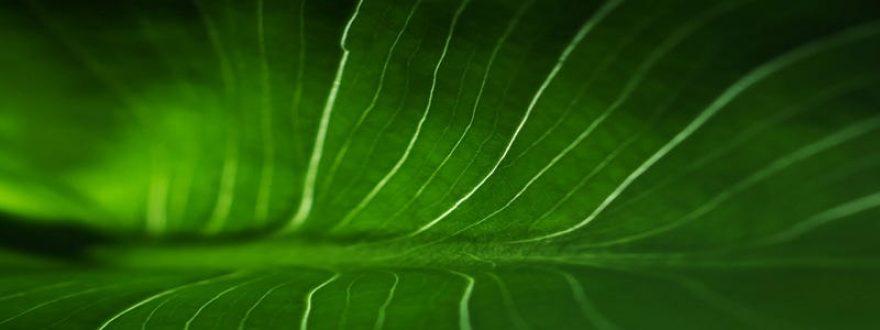 Изображение для стеклянного кухонного фартука, скинали: растение, skinap58