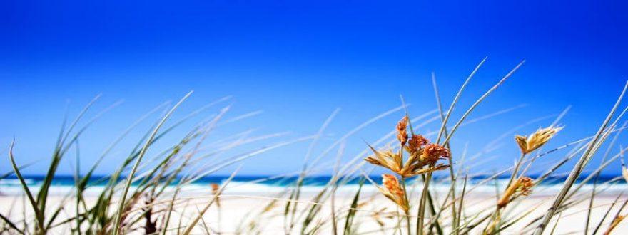 Изображение для стеклянного кухонного фартука, скинали: трава, небо, растение, skinap60