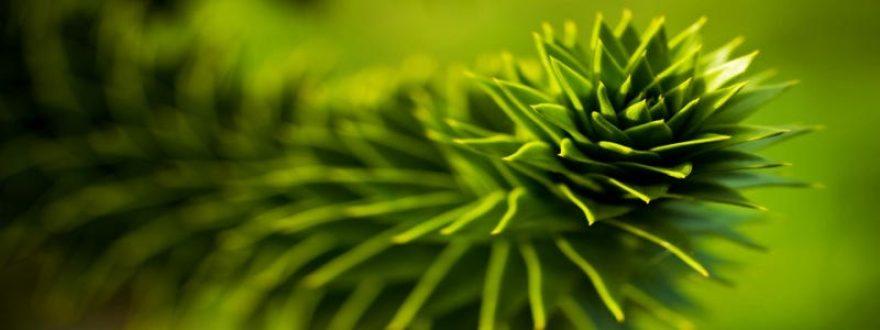 Изображение для стеклянного кухонного фартука, скинали: растение, skinap66