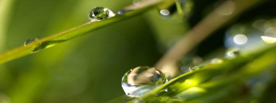 Изображение для стеклянного кухонного фартука, скинали: трава, роса, skinap67