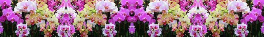 Изображение для стеклянного кухонного фартука, скинали: цветы, орхидеи, skinap73