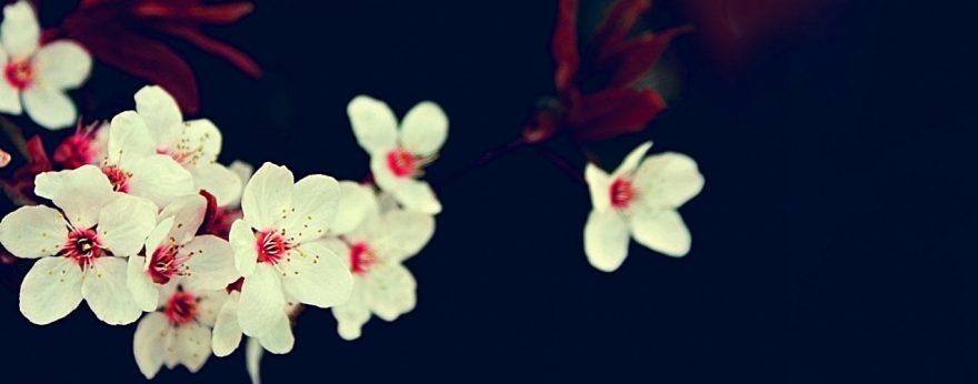 Изображение для стеклянного кухонного фартука, скинали: цветы, яблоня, skinap89