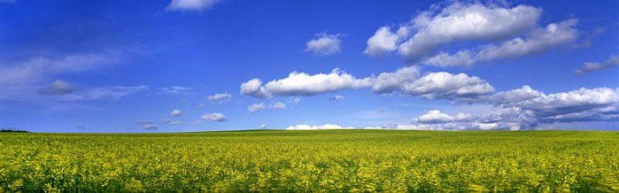 Изображение для стеклянного кухонного фартука, скинали: цветы, поле, природа, небо, облака, skinfil12