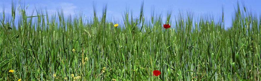 Изображение для стеклянного кухонного фартука, скинали: цветы, трава, пшеница, skinfil15