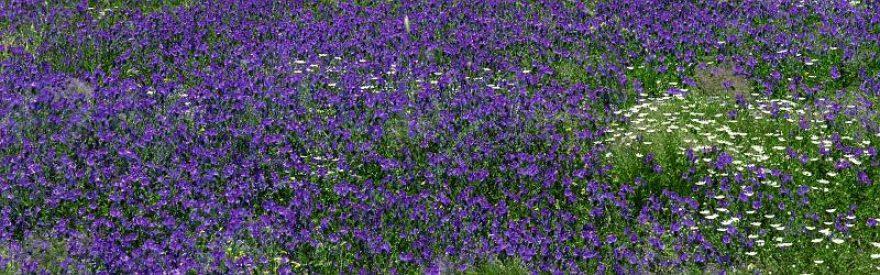 Изображение для стеклянного кухонного фартука, скинали: цветы, поле, skinfil21