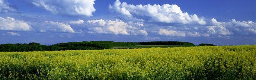Изображение для стеклянного кухонного фартука, скинали: цветы, поле, природа, небо, облака, skinfil24