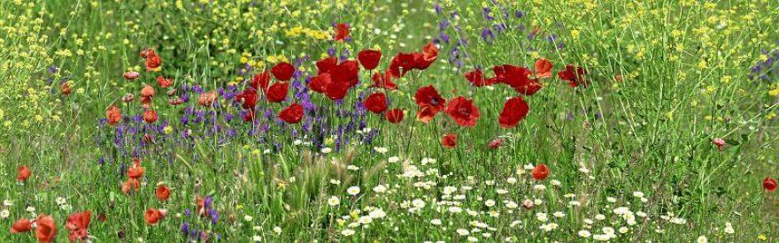 Изображение для стеклянного кухонного фартука, скинали: цветы, маки, трава, skinfil27