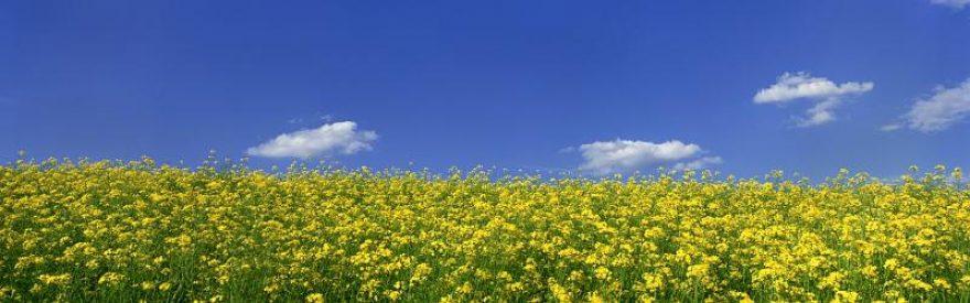 Изображение для стеклянного кухонного фартука, скинали: цветы, поле, природа, небо, skinfil3