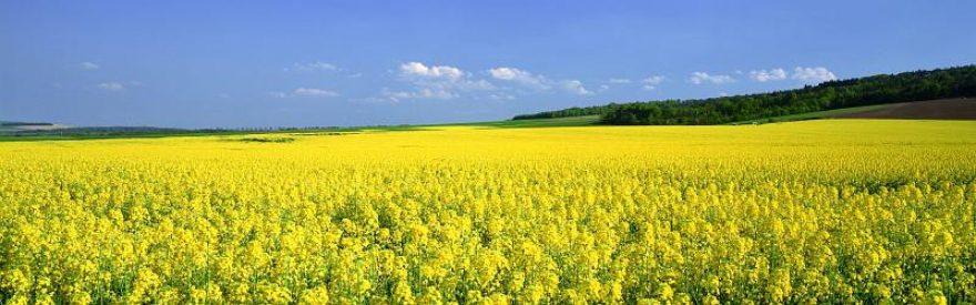 Изображение для стеклянного кухонного фартука, скинали: цветы, поле, skinfil5