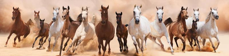 Изображение для стеклянного кухонного фартука, скинали: животные, лошади, fartux1670