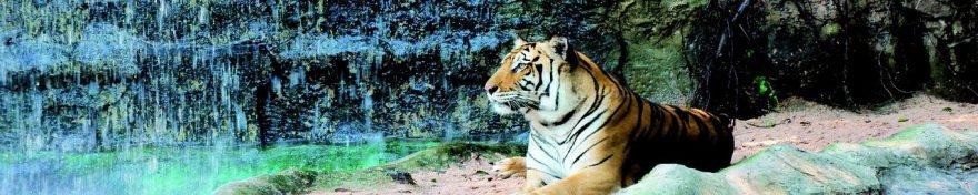 Изображение для стеклянного кухонного фартука, скинали: животные, тигры, fartux661