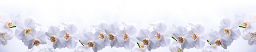 Изображение для стеклянного кухонного фартука, скинали: цветы, орхидеи, rastcve064