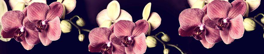 Изображение для стеклянного кухонного фартука, скинали: цветы, орхидеи, rastcve074