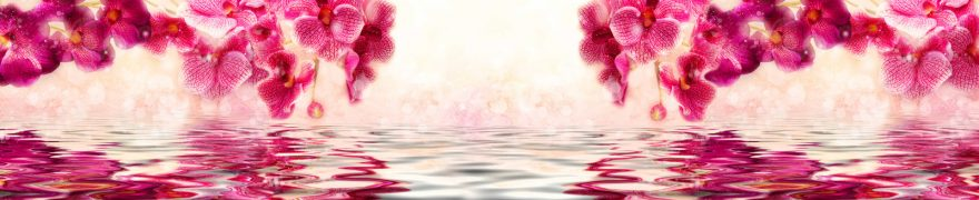 Изображение для стеклянного кухонного фартука, скинали: цветы, орхидеи, rastcve076