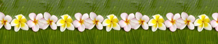 Изображение для стеклянного кухонного фартука, скинали: цветы, rastcve087