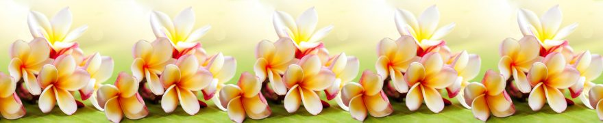 Изображение для стеклянного кухонного фартука, скинали: цветы, rastcve092