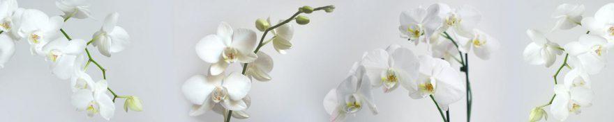 Изображение для стеклянного кухонного фартука, скинали: цветы, орхидеи, skin348