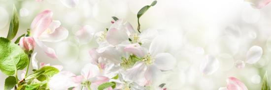 Изображение для стеклянного кухонного фартука, скинали: цветы, skinap38
